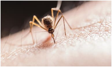 Pest Control Tips And Tricks