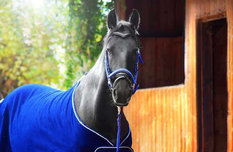 Horse Riding Tips & How to pet and shelter Horses.