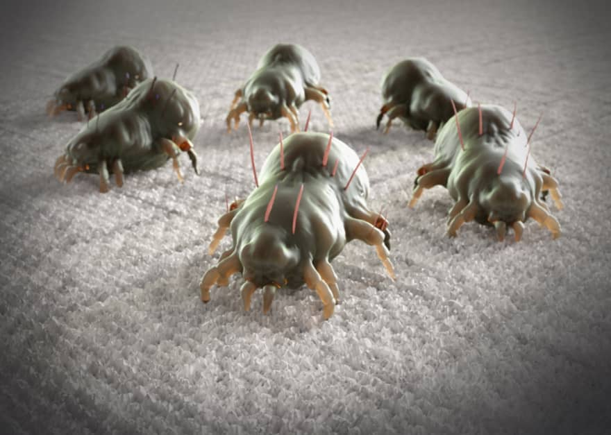 Bed Bugs Attacking
