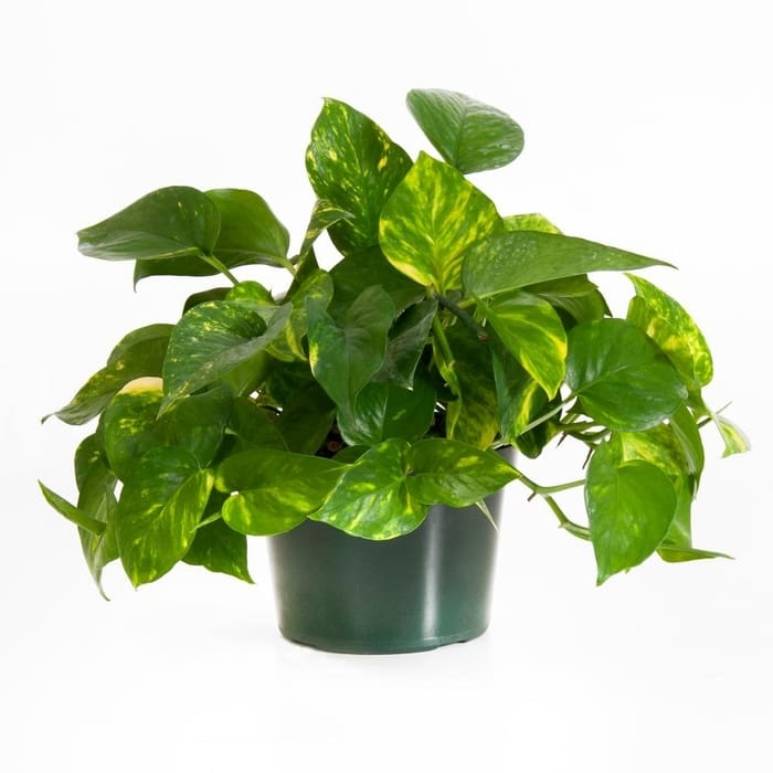 House Plants For Decor