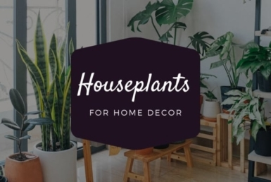 Houseplants Your Home