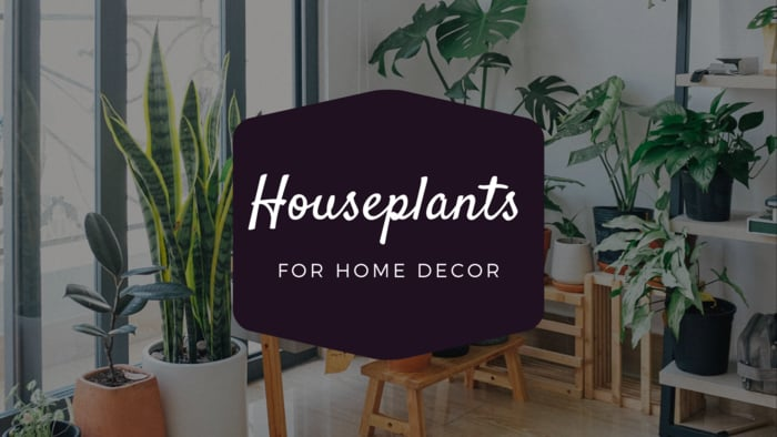 House Plants For Decor. Which Houseplants Should You Buy